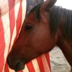 U S Horsemanship BarbaraEllinFox.com